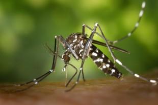 Zika virüsü nedir, Zika virüs,Aaedes aegypti, Sivrisinek,Wolbachia pipientis, Zika virüsü belirtileri, Zika virüsü türkiye